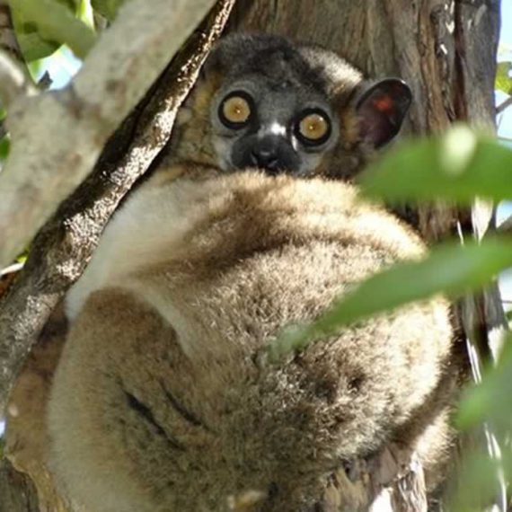 Top 3 des parcs et réserve spéciale reculés du sud de Madagascar