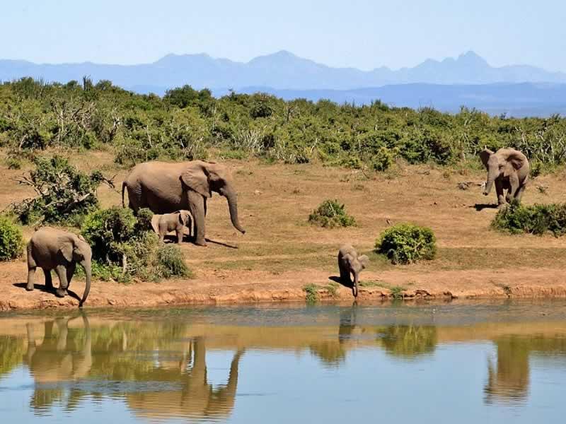 Un voyage découverte 100 % nature au cœur du Zimbabwe